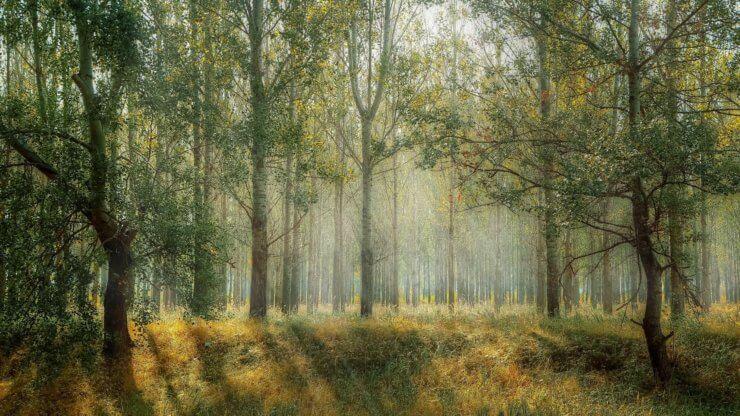 Wald im Fläming